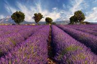 Soleil, plage, ambiance festive et farniente, voyagez à travers la belle Provence