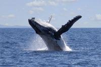 Baleine échouée plage Philippines Greenpeace