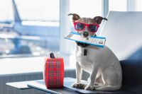 como viajar en avión con mascota