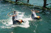 Reiseanbieter nehmen Tierattraktionen aus dem Programm