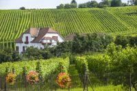 Weinguide
