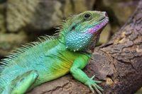 WWF nimmt 115 neue Arten auf
