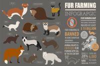 noruega prohíbe explotacion  animales pieles