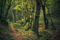 Forêt d'Aokigahara japonais viennent s'y suicider