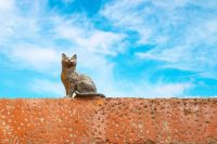 Exploring France's city of cats
