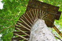 Veneto riconosce case sull'albero come strutture ricettive