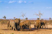 50 espèces menacées par le réchauffement climatique