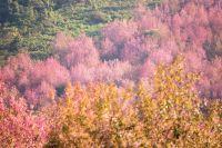 Forêt en chine qui fleurit pour un spectacle magnifique