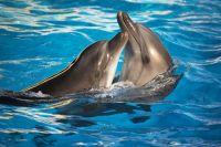 6 lugares España  ver delfines