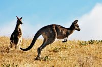 Marsupial tué par des visiteurs d'un zoo
