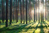 Cabane dans la forêt de Picardie pour petits et grands