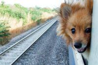 Italie les animaux peuvent voyager gratuitement