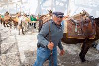 Obèses et ânes en Grèce