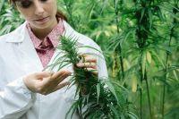 Feu vert pour le cannabis thérapeutique en France