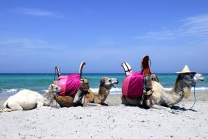 Vingt-cinq raisons de ne jamais faire un voyage en Tunisie