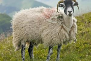 Dänemark verbietet Geschlechtsverkehr mit Tieren