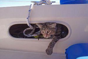 Paar reist mit Katze im Boot um die Welt