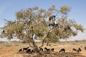 Voyage autour du monde  les arbres les plus étranges de la planète