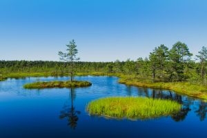 Zauberhaftes Estland
