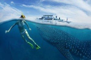dove è possibile nuotare con gli squali balena in tutto il mondo