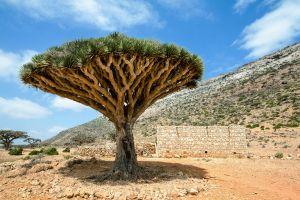 8 secrets of Socotra Island Yemen