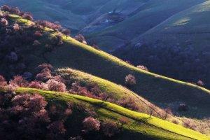 Die 20 schönsten Wälder der Welt