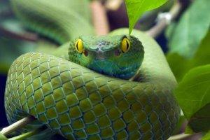 Un serpente provoca panico su un volo di Aeromexico causando un atterraggio di emergenza