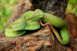 Un passager filme un serpent, caché dans un casier à bagages