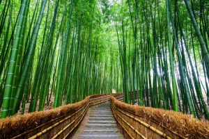 20 most beautiful forests in the world