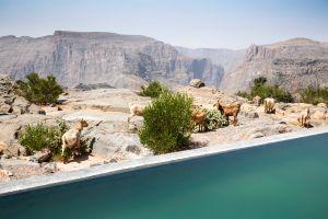 Voyage à Oman dans le plus haut 5* du Moyen Orient