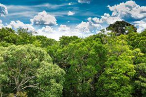 Premières images d'une tribu amazonienne isolée du monde