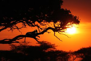 Tanzania's most beautiful landscapes