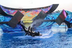 Neues Seaworld in Abu Dhabi geplant