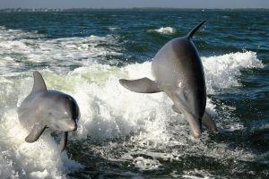 Cancún sauvetage d'une vingtaine de dauphins