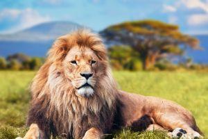 Diese Tiere kann man bei einer Safari in Afrika bestaunen