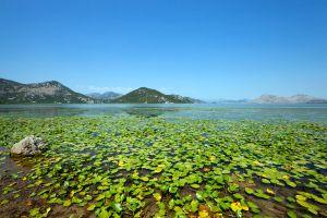 New eco-resort coming to Montenegro Lake Skadar