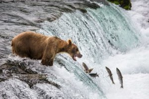 Best places in America for wildlife spotting