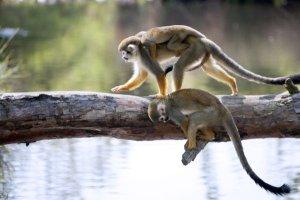 Discover Manuel Antonio National Park Costa Rica