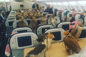 Billet d'avion à 630 dollars par faucon à bord de la compagnie aérienne Qatar Airways