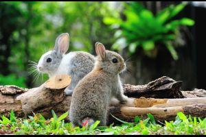 Ein Kaninchen-Café in Hong Kong hat eröffnet