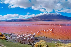 Laguna Colorada: Bolivia's extraordinary red lagoon