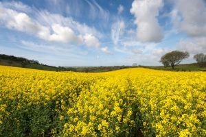 Der perfekte Frühlings-Roadtrip durchs UK