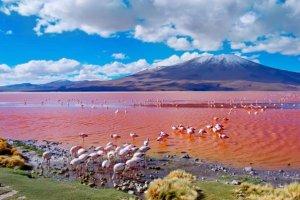La Laguna Colorada, Boliviens außergewöhnliche rote Lagune