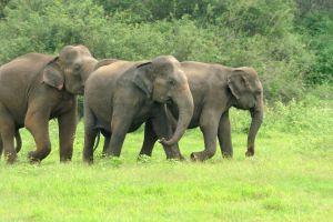 Auffangstation für Elefanten auf Ko Phuket eröffnet