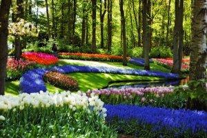 la primavera en un amsterdam que florece