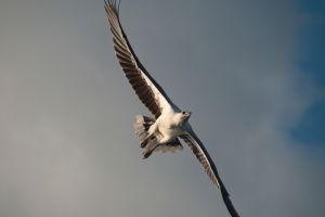 VIDEO Australien im Auge des Adlers