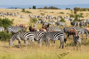 Der Tierretter von Kenia