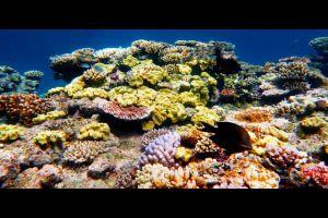 Great Barrier Reef in Gefahr