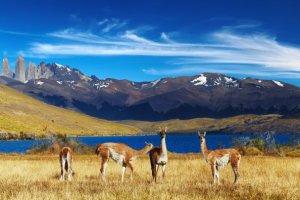 In Cile ci saranno cinque nuovi parchi nazionali grazie alla donazione di terra più grande della storia da parte di un privato