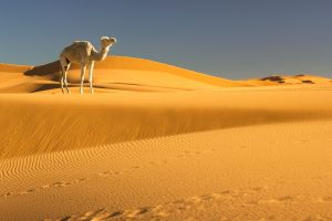Billet d'Avion Paris - Marrakech  c'est le bon moment pour découvrir la culture marocaine
